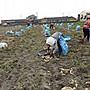 台農57號地瓜(黃皮黃肉)小型規格的50斤1000元優惠50斤免運費 慧軒農場