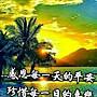 KOALA  無尾熊  全家福   黃金紀念貼片              【 可『 郵寄 』或『 超商取貨 』 】