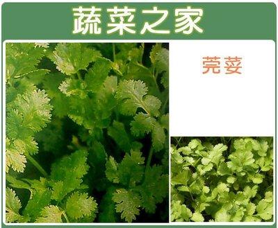 【蔬菜之家】F04.芫荽(香菜)種子500顆(1顆破殼後有2粒種子)(香菜、香味濃,易栽培.蔬菜種子)