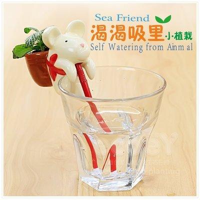 LoVus - 新款渴渴吸裡小動物植物盆栽 ~ 不含杯子-