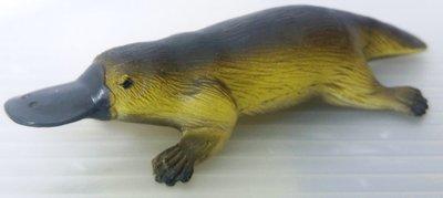 龍廬-自藏出清~澳大利亞自然科學生物公仔-仿真動物模型platypus鴨嘴獸/只有一隻