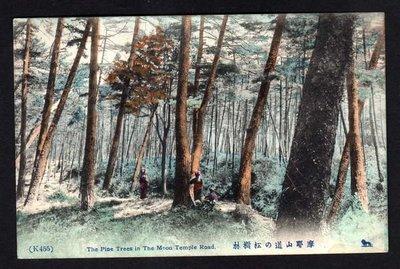 【中外郵舍】彩色圖畫明信片/摩耶山道松樹林