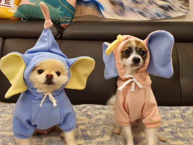 家裡的小怪獸   寵物衣服可愛大象耳朵純色連帽套頭衛衣
