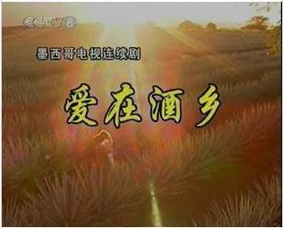 墨西哥【愛在酒鄉】央視國配 全80集8碟DVD