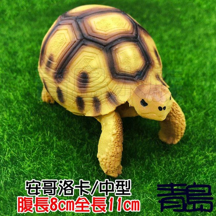 Y。。。青島水族。。。A5中國NOMO諾摩---仿真陸龜模型 3D擬真模型 烏龜/陸龜公仔==安哥洛卡/中型