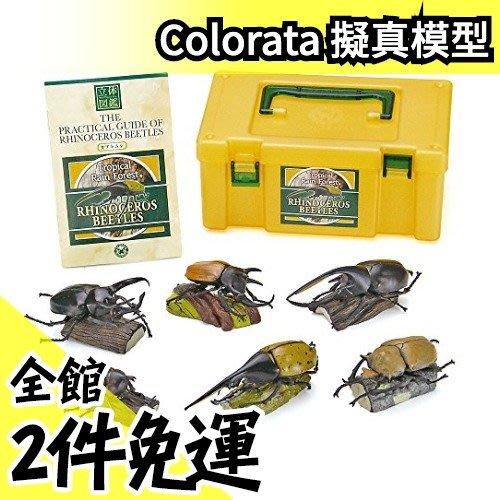 日本空運【獨角仙 6隻組】 Colorata 獨角仙立體圖鑑 擬真模型組 盒玩 考古生物【水貨碼頭】