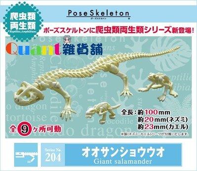 ∮Quant雜貨舖∮┌日本盒玩┐RE-MENT 骷髏 Pose Skeleton 兩棲爬蟲類 NO.204 娃娃魚