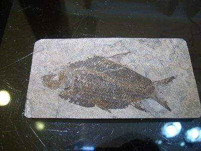 御寶閣Viboger~古董文物藝品~~江漢魚化石~~