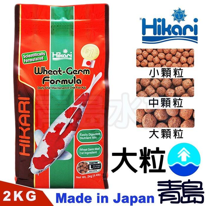 BS。。。青島水族。。。06470日本Hikari高夠力-----錦鯉胚芽飼料==2kg(中顆粒)L