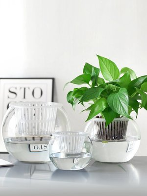 【現貨】 水培植物玻璃瓶水培綠蘿花盆花瓶透明容器圓球形器皿客廳魚缸擺件 花瓶 擺件SG27350