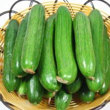 以色列全雌小黃瓜(免授粉產量高)(種子每份2顆)H1005