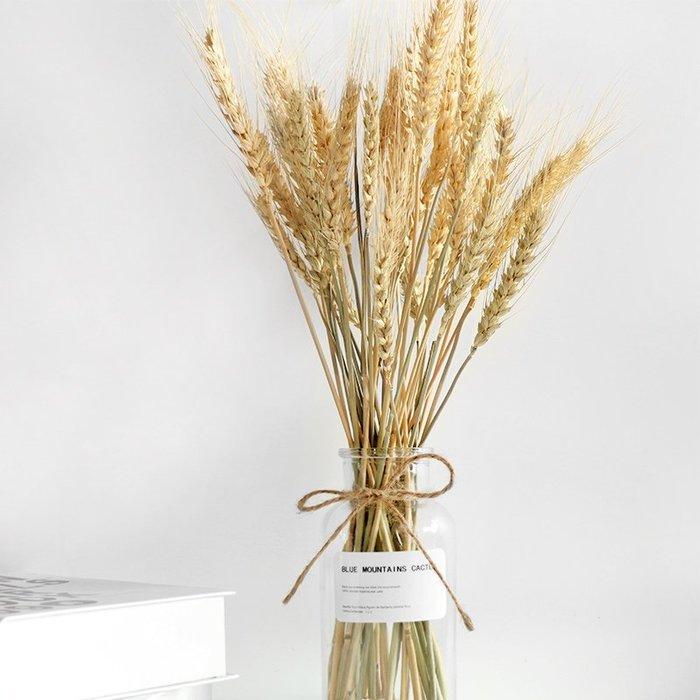 西柚姑娘雜貨鋪☛熱賣中#天然麥穗道具 復古干花 攝影道具 拍攝背景 網店拍照布景 7枝價
