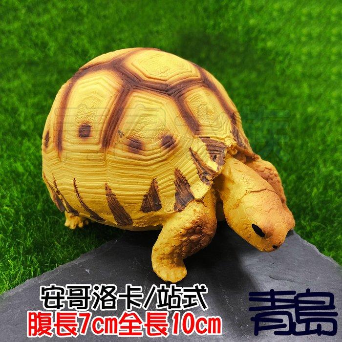 Y。。。青島水族。。。A4中國NOMO諾摩---仿真陸龜模型 3D擬真模型 烏龜/陸龜公仔==安哥洛卡/站式
