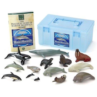 日本正版 立體圖鑑擬真模型BOX 海洋哺乳類 13種組 小模型 小公仔 日本代購