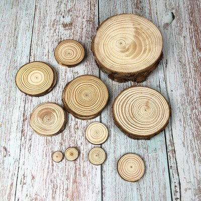 BEAGLE 9-10CM 擺件 底座 小圓木 圓木片 實木片 松木 苔蘚微景觀飾品 方木 10送1