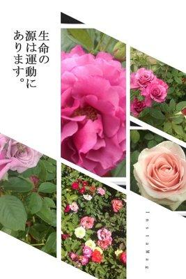吉園農場@香草綜合下標區(二)~ 無農藥栽培,可直接食用。歐 法 義 日式 香料