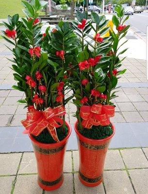 開幕盆栽 金錢樹一對G1205♡中和區朵麗絲花店 盆栽組合創意設計