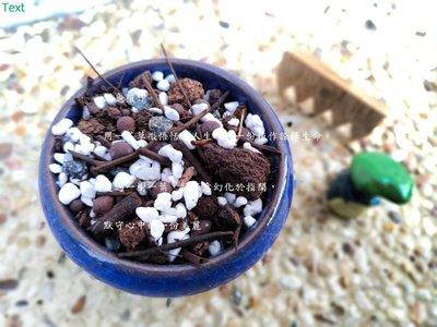 泥龜【仙人掌 專用土_3L】仙人掌 栽培土 培養土 辦公室植栽 園藝 資材 多肉 土壤 介質