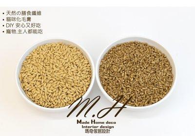 M.H 瑪奇 (DIY小麥草種子) 大麥草 小麥 燕麥 黑麥 貓草種子 貓草種植 小麥草種子 貓草 天然化毛膏