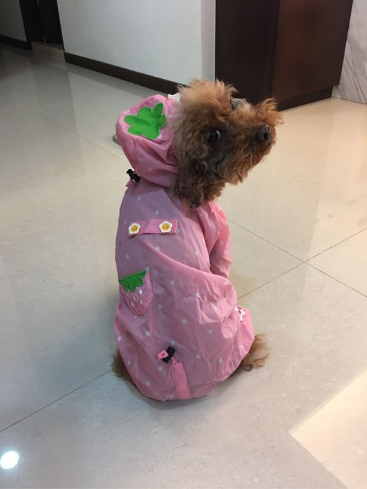 。☆like new☆。超可愛狗雨衣//小型犬//粉紅//草莓