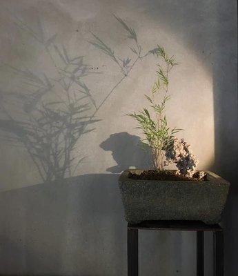 若 茶道具 古美術 清末 青斗石 石盆