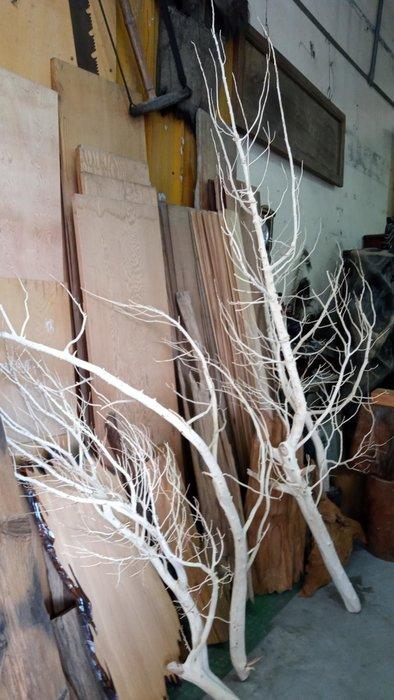 *阿柱的店*台灣天然龍柏 枝幹 裝置藝術 花藝 設計