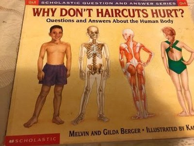 Q & A why don't haircuts hurt scholastic question and answer