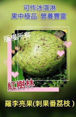 【紅樹林】羅李亮果、刺果番荔枝、日本釋迦 (種子)~每份30粒