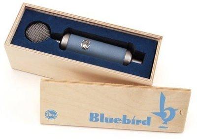 <TENCHEER> Blue Microphones Bluebird 麥克風 Cardioid Condenser Microphone 新北市