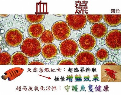 血藻顆粒飼料:開口料+增豔 + 絕佳特有誘引性 + 抗氧化保健/中顆粒,500g/包
