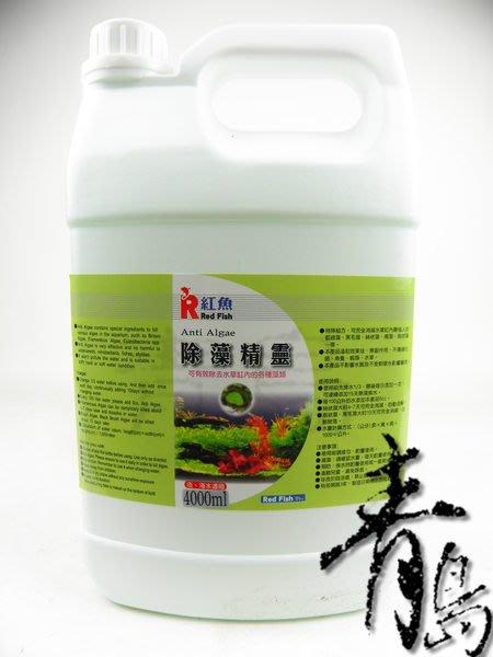 。。。青島水族。。。台灣Red Fish紅魚---除藻精靈(強力推薦)==4L(買2送1)免運費