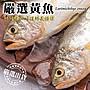 【海陸管家- 全省免運】巨無霸野生深海黃魚1...