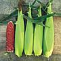 【優良蔬菜種子】黑玉米~ ~ 70顆種子。不是黑...