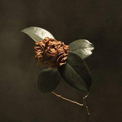 【黑膠唱片LP】早凋的茶花 Young Sick Camellia / 聖保羅與傷者樂團---19075878101