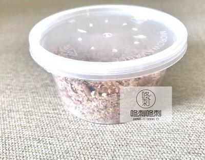 咚刺咚刺 新鮮麵包蟲 刺蝟 蜜袋鼯 鼠鼠 坐月子 營養補充