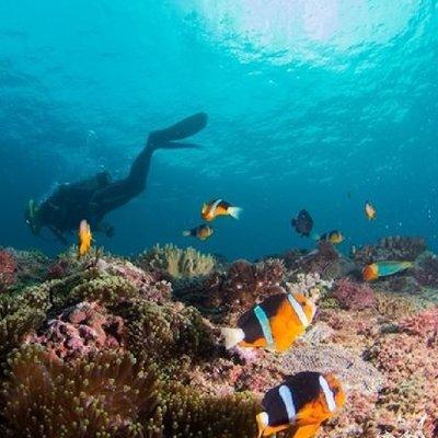 @~梅姐小舖~@ 【墾丁】台灣潛水-潛水體驗單人券(無潛水證照可玩) 2180元