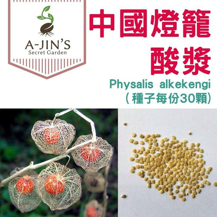 【阿金的便秘花園】酸漿 掛金燈 中國燈籠 Physalis alkekengi(種子每份30顆100)P008