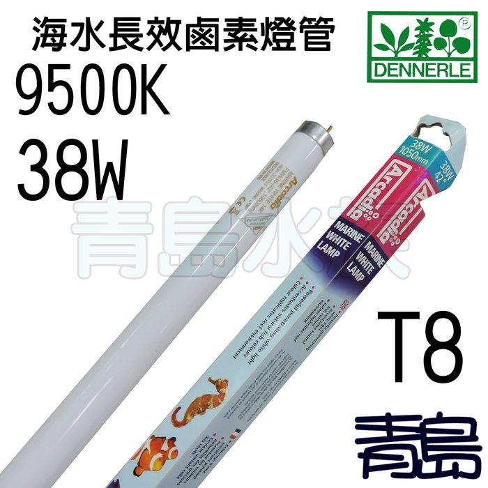 五5中3↓庫存品。。。青島水族。。。J-FMW38英國阿卡迪亞Arcadia-T8-海水長效鹵素燈管9500K=38W