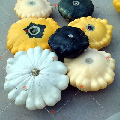 【小鮮肉肉】玩具南瓜種子-獎盃(飛碟型混色)(5粒裝) 可食用 庭院陽台易種