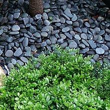 免費 免費/請自取。園藝 造景資材/天然石材 鵝卵石 庭園室外美化 陽台佈置