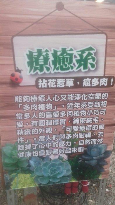 療癒係好種植 仙人掌 石蓮花 多肉1 各式 品種 3盆200塊優惠超商取貨免運費