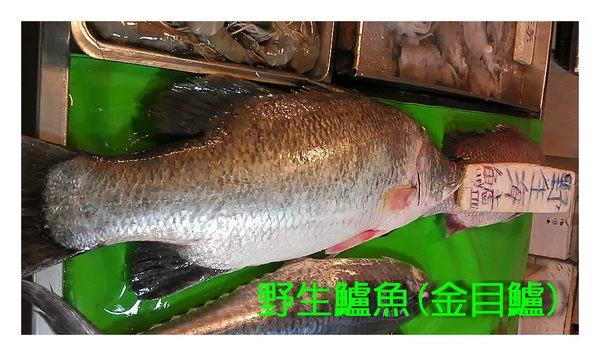 阿堯鮮魚店!!正野生鱸魚(野生海鱸魚)現撈大白鯧魚另有海中的極品正真圓鱈(真正的鱈魚).