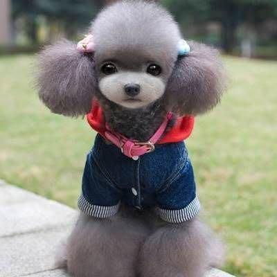 寵物衣 秋冬狗狗衣服-可愛加厚套腳款中小型犬寵物用品73ih42[獨家進口][米蘭精品]