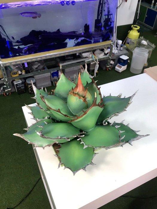 龍舌蘭保麗龍雕刻 人造植物 客製化