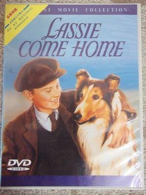 才看過二次的DVD Lassie Come Home (靈犬萊西)