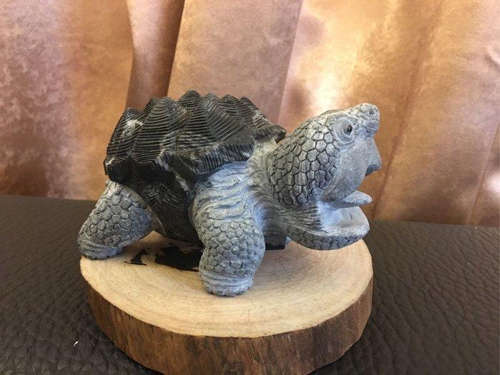 [崇石弄]黑曜石 鱷龜