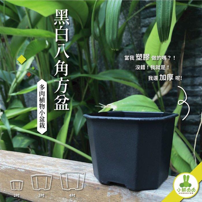 【小鮮肉肉】植栽八角盆 4吋 黑白兩色 塑膠加厚 多肉 栽培盆 花盆 八角盆