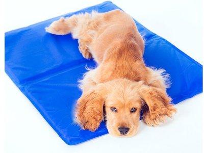 日本最新款 寵物冰墊 小朋友 涼墊 降溫 小款 狗窩 狗床 貓床 風扇 冷氣 竹蓆 涼被 拉不拉多【HP04】