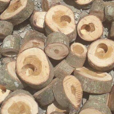 昆蟲果凍木頭 各種尺寸選擇