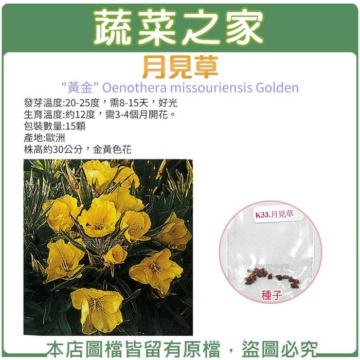 【蔬菜之家】K33.月見草種子15顆(株高約30公分,金黃色花.香草種子)